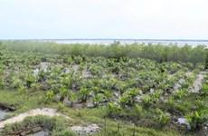 政府总理批准对《保护与发展沿海森林提案》进行调整