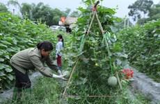 20年来流入农业领域的官方发展援助资金达近20亿美元