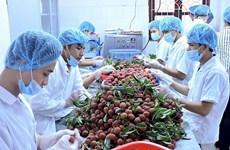 2019年前6个月越南蔬果出口额突破20亿美元