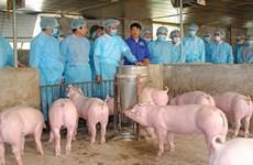 越南非洲猪瘟疫情形势依然复杂严峻