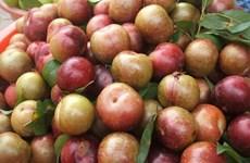 山萝省特产水果出口创汇走高