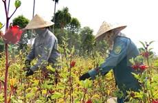 联合国可持续发展目标实施情况报告对外公布 越南上升三个位次