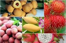 2019年前7月越南蔬果出口额达23.1亿美元