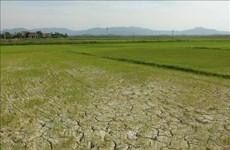 越南中部超过6.5万公顷农作物面临旱灾和缺水危机