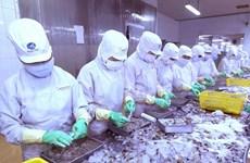 芹苴市与日本企业将虾壳加工成为食品工业原料