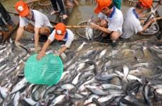 九龙江三角洲地区各省市探讨进一步促进查鱼出口的措施