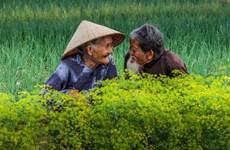 """""""越南老年夫妇秀恩爱""""照片跻身国际摄影比赛前50名单"""