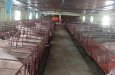 北江省加强疾病预防与控制  实现畜牧业结构重组