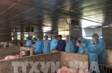 德国愿与首都河内分享有关非洲猪瘟疫情防控经验
