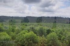 大力加强西原地区护林队伍建设  提升森林保护质量