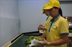 欧盟于9月1日起开始对越南农产品进行严格检查