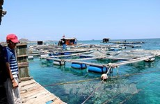 越南积极健全水产资源保护与开发规划