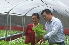 胡志明市走向对外出口农作物种子种苗的目标