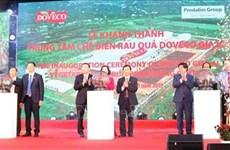 越南西原地区最大蔬菜加工厂正式投入运行