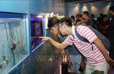 2019年第四届胡志明市观赏鱼展览会正式开幕