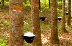 泰国成为世界第一大橡胶出口国