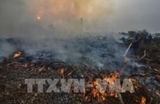 印尼关闭30多家农场 以减少森林火灾发生