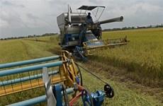 2019年10月起泰国政府开展大米价格保证计划