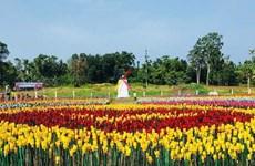 菲律宾:以塑料垃圾制成的郁金香花园