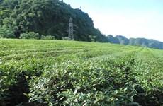 乂安省军民共同携手种下脱贫致富茶
