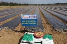 广义省采用日本大蒜种植技术