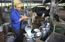 本月内越南首次向中国出口牛奶
