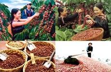 美国媒体高度评价越南咖啡出口的跨越性增长
