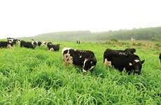 越南乳制品迎来新机会