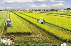 越南农业应注重朝着更深层更专业方向发展