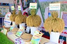 第四届越南大米节今日开幕