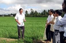 越南朔庄省ST24大米被公认为2019年世界最好大米