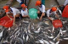 安江省农产品加大对欧洲市场出口力度的机会广阔