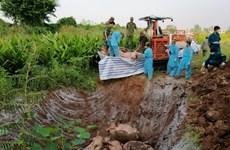 安江省破获一起非法运输生猪案 生猪53头 总重量超3.7吨
