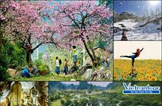 越南春节旅游市场步入旺季