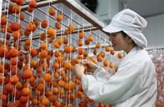 采用日本技术的柿饼生产厂正式投运