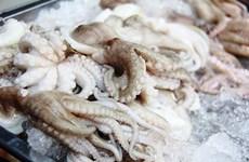 越南墨鱼与章鱼深受美国市场的青睐