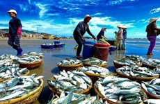 """越南争取欧洲理事会取消对本国海产的""""黄牌警告"""":困难再大也要做到"""