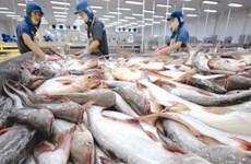 越南查鱼对俄罗斯出口大幅下降