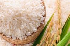 印尼力争2020年大米出口量达到50万吨