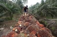 印尼与欧盟的贸易纠纷因棕榈油问题不断升级