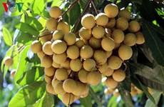 越南山萝省获商标保护认证农产品达18个