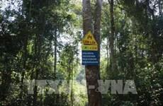 特用林和防护林是可持续发展的核心