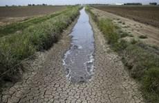 北宁省采取紧急行动应对气候变化
