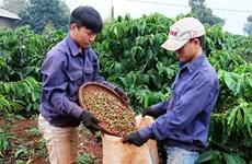 升级越南咖啡品牌