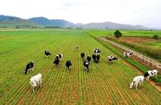 越南养殖业朝着工业化、现代化方向发展