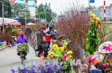 2020年河内迎春花市即将开市 50多个赏花点等你来赏购
