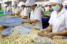 2020年越南腰果出口额力争达到40亿美元
