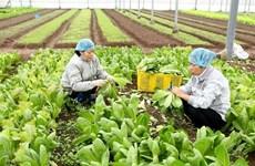 越南蔬果迎来新机遇