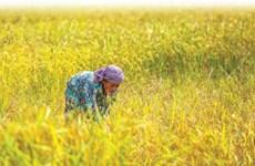 2019年柬埔寨大米对中国出口量增长了46%