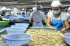 2019年越南腰果果仁出口量和未加工腰果进口量均创下新纪录